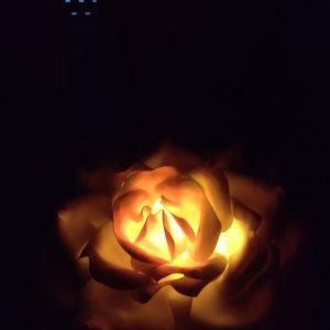 Роза гигант -лампа