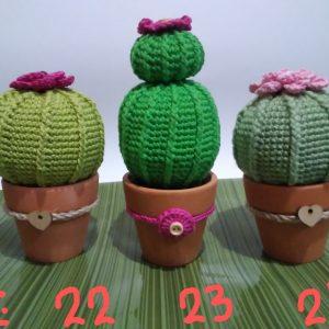 Плетени кактуси в саксийка
